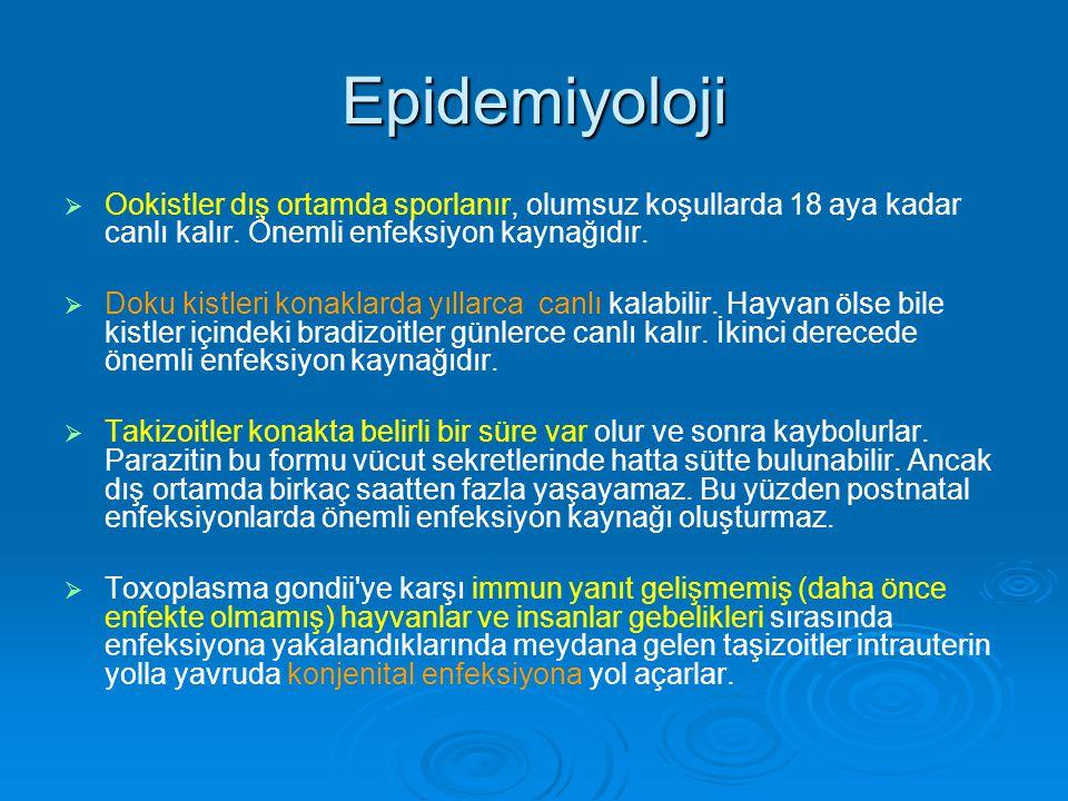 Epidemiyoloji Ookistler dış ortamda sporlanır, olumsuz koşullarda 18 aya kadar canlı kalır. Önemli enfeksiyon kaynağıdır.