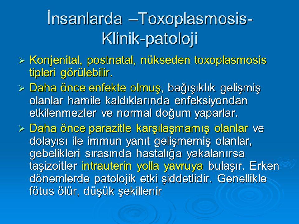 İnsanlarda –Toxoplasmosis- Klinik-patoloji