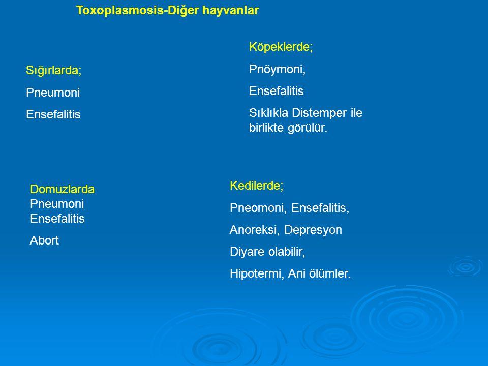 Toxoplasmosis-Diğer hayvanlar
