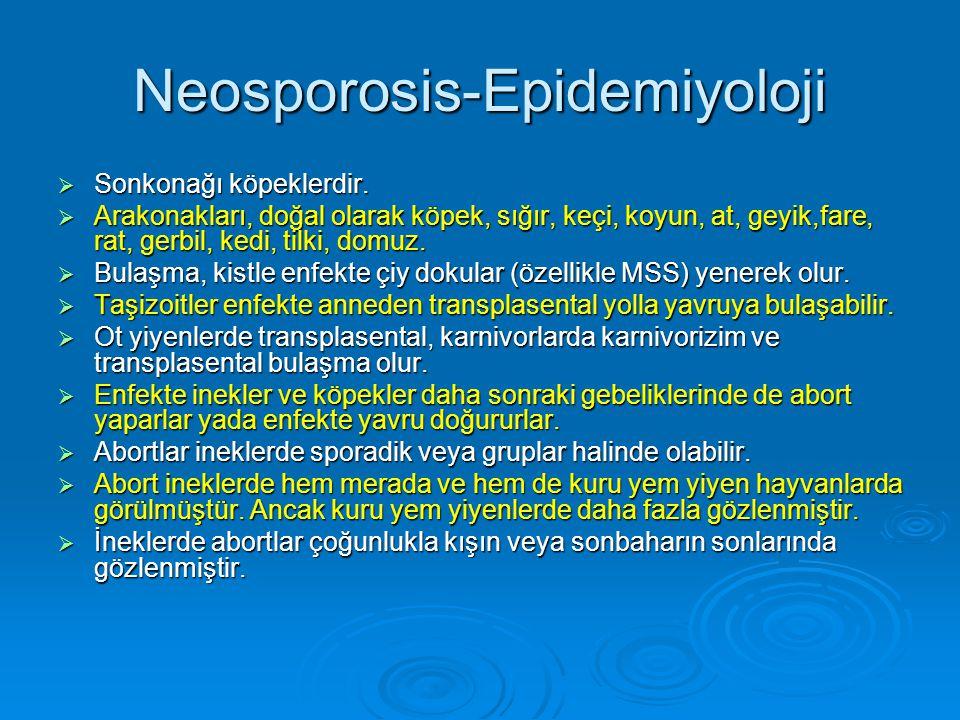 Neosporosis-Epidemiyoloji