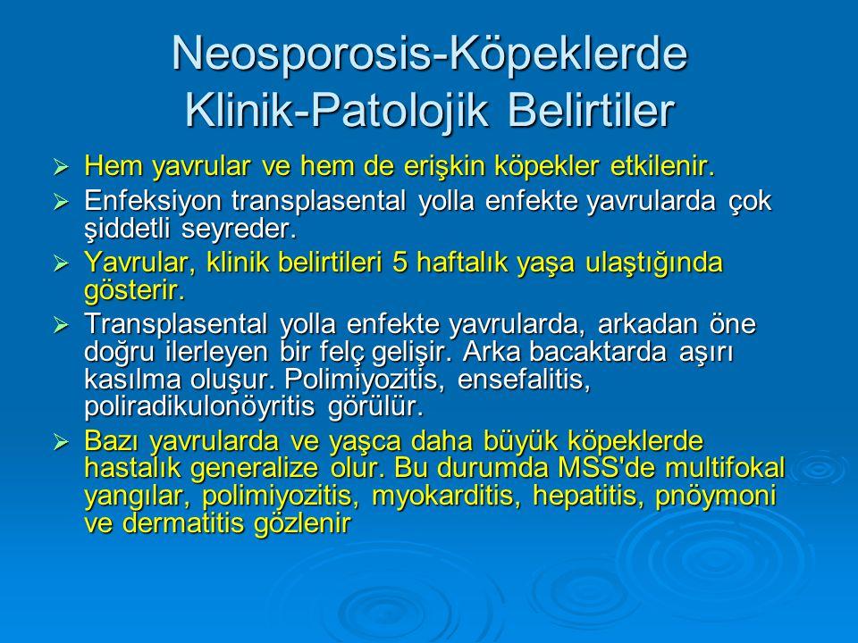 Neosporosis-Köpeklerde Klinik-Patolojik Belirtiler