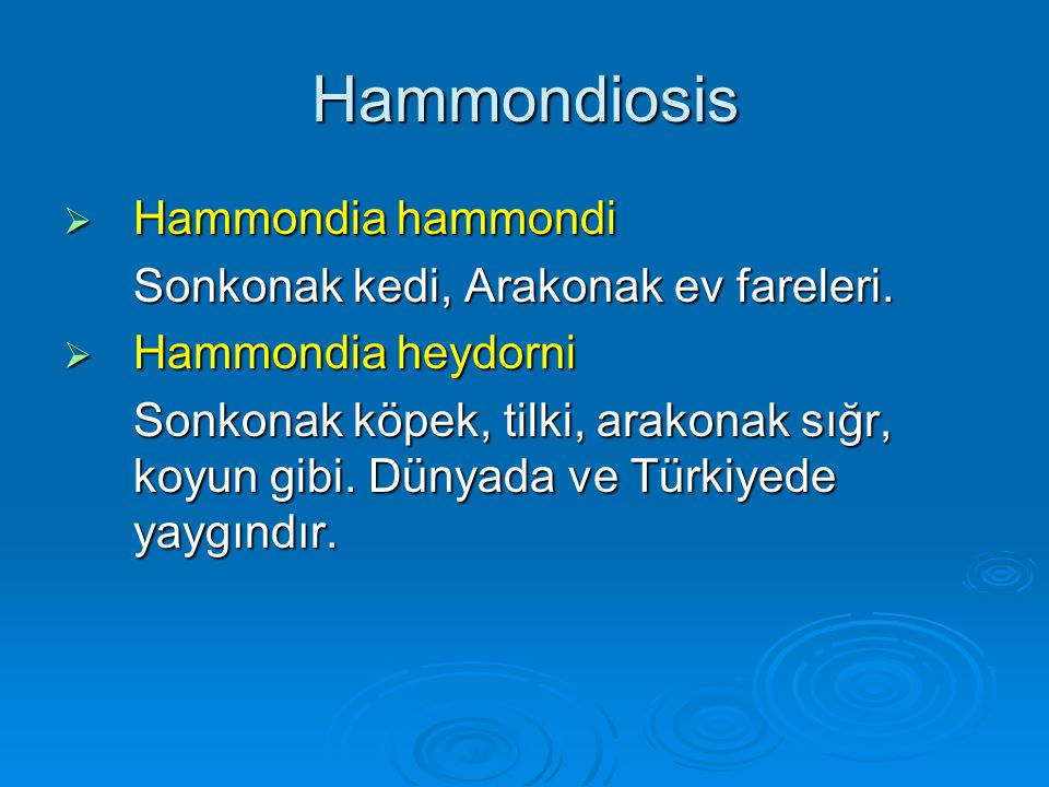Hammondiosis Hammondia hammondi Sonkonak kedi, Arakonak ev fareleri.
