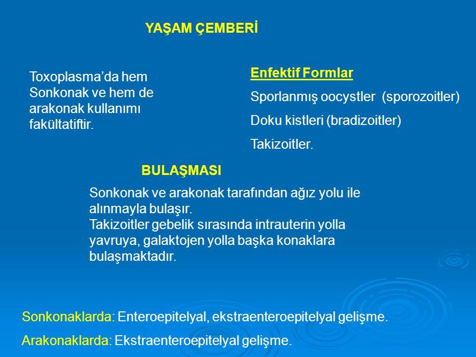 YAŞAM ÇEMBERİ Enfektif Formlar. Sporlanmış oocystler (sporozoitler) Doku kistleri (bradizoitler)