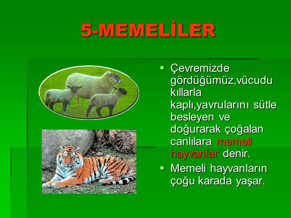 5-MEMELİLER Çevremizde gördüğümüz,vücudu kıllarla kaplı,yavrularını sütle besleyen ve doğurarak çoğalan canlılara memeli hayvanlar denir.