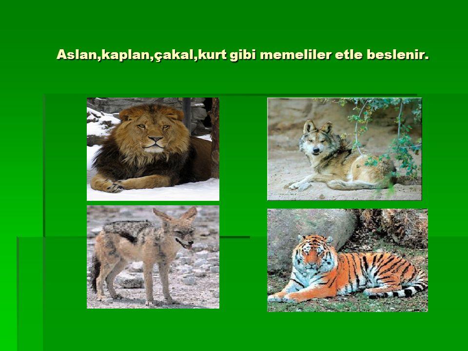 Aslan,kaplan,çakal,kurt gibi memeliler etle beslenir.