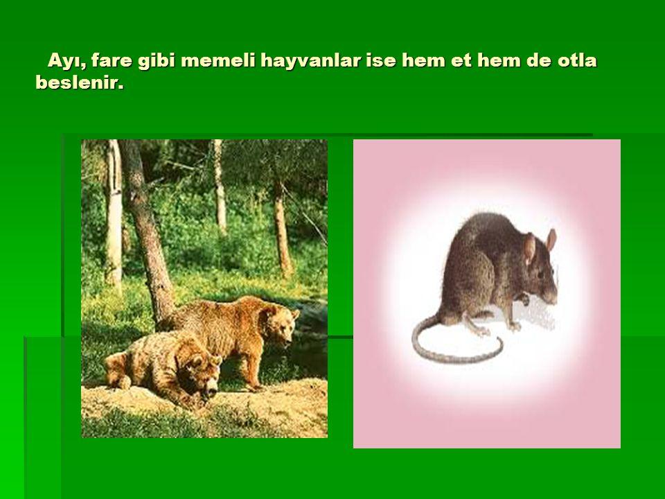 Ayı, fare gibi memeli hayvanlar ise hem et hem de otla beslenir.