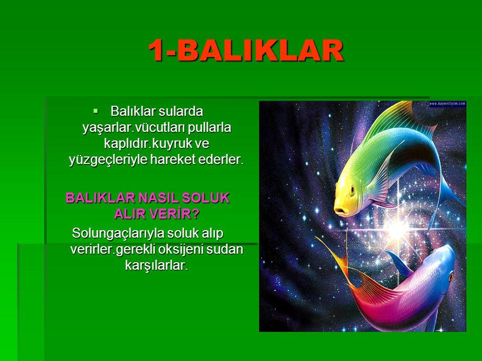 BALIKLAR NASIL SOLUK ALIR VERİR