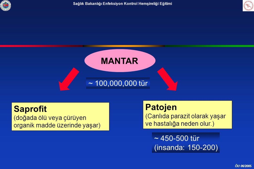 MANTAR Patojen Saprofit ~ 100,000,000 tür ~ 450-500 tür