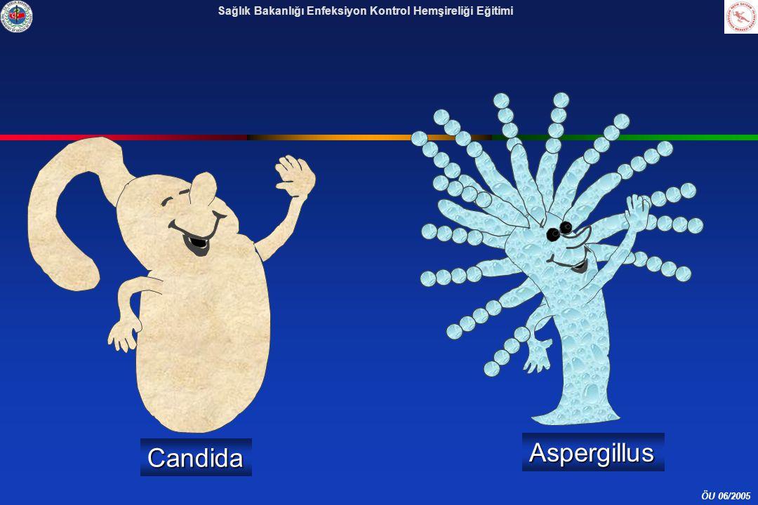 Aspergillus Candida