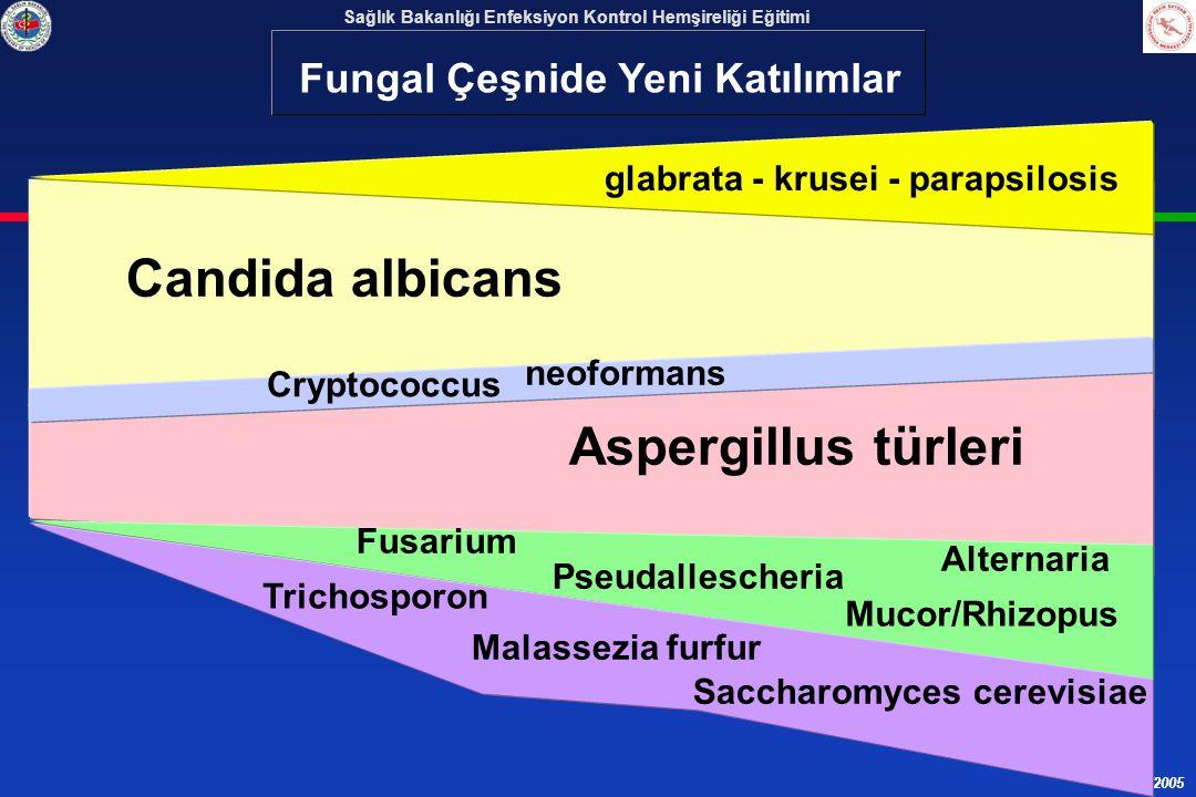 Candida albicans Aspergillus türleri Fungal Çeşnide Yeni Katılımlar