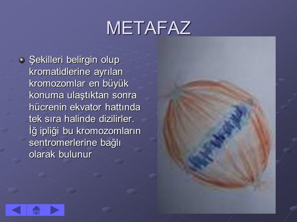 METAFAZ