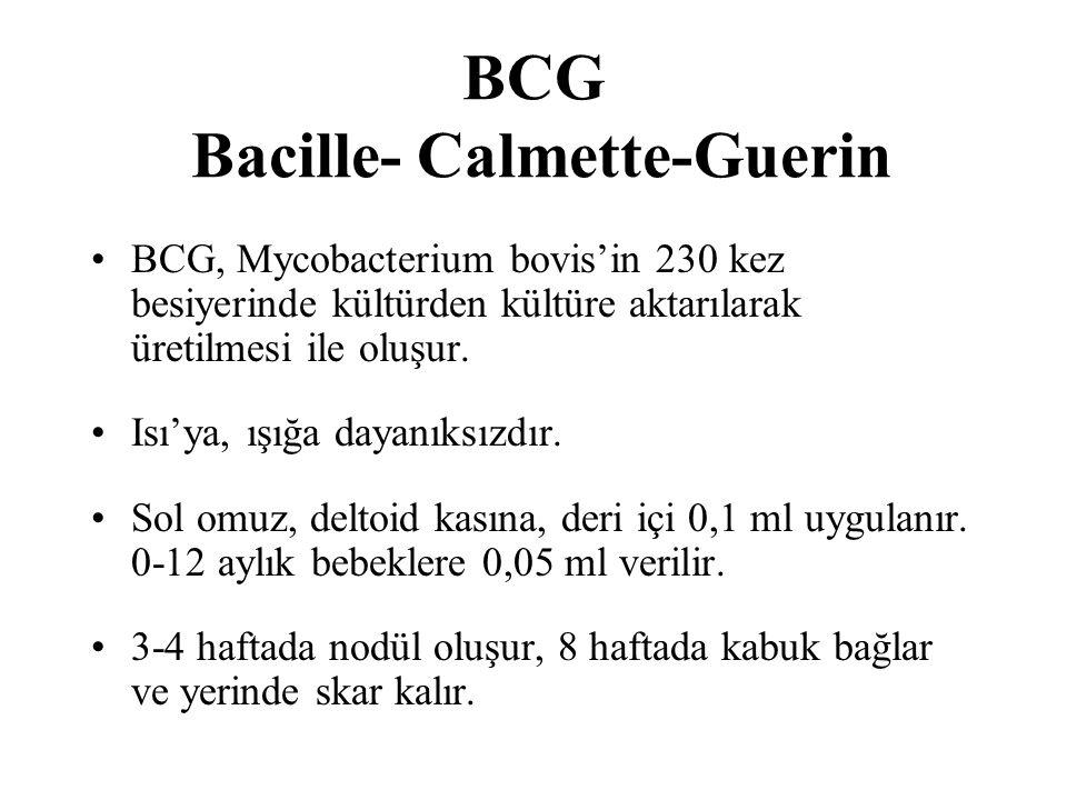 BCG Bacille- Calmette-Guerin