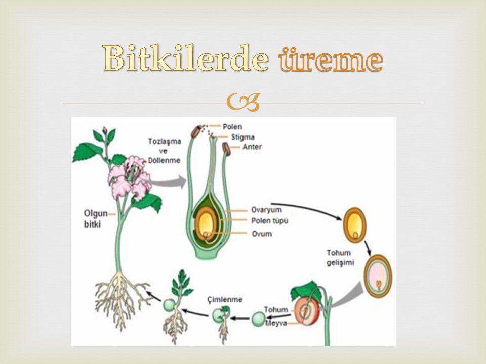 Bitkilerde üreme