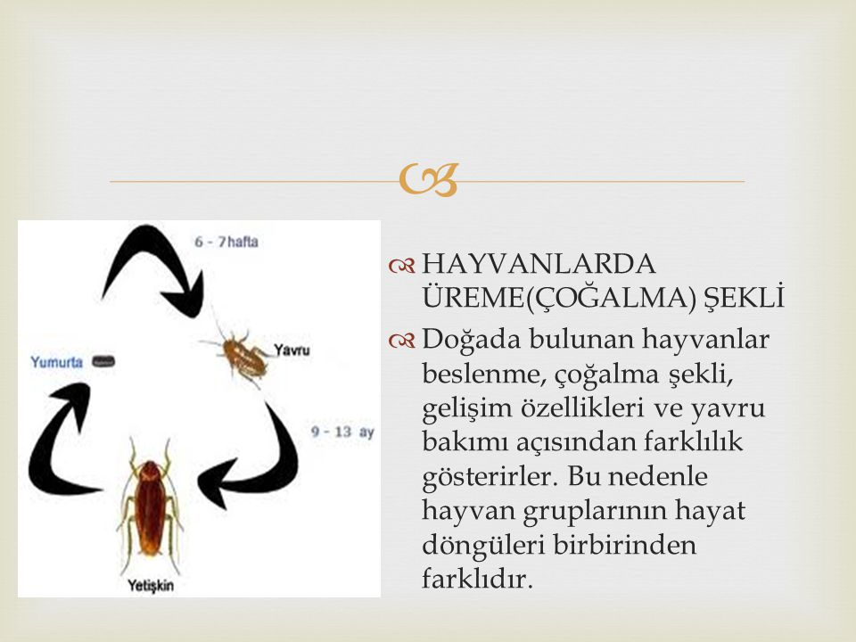 HAYVANLARDA ÜREME(ÇOĞALMA) ŞEKLİ