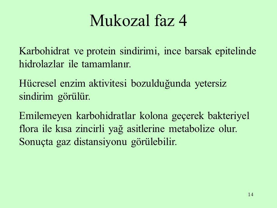 Mukozal faz 4 Karbohidrat ve protein sindirimi, ince barsak epitelinde hidrolazlar ile tamamlanır.