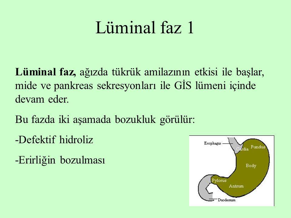 Lüminal faz 1 Lüminal faz, ağızda tükrük amilazının etkisi ile başlar, mide ve pankreas sekresyonları ile GİS lümeni içinde devam eder.