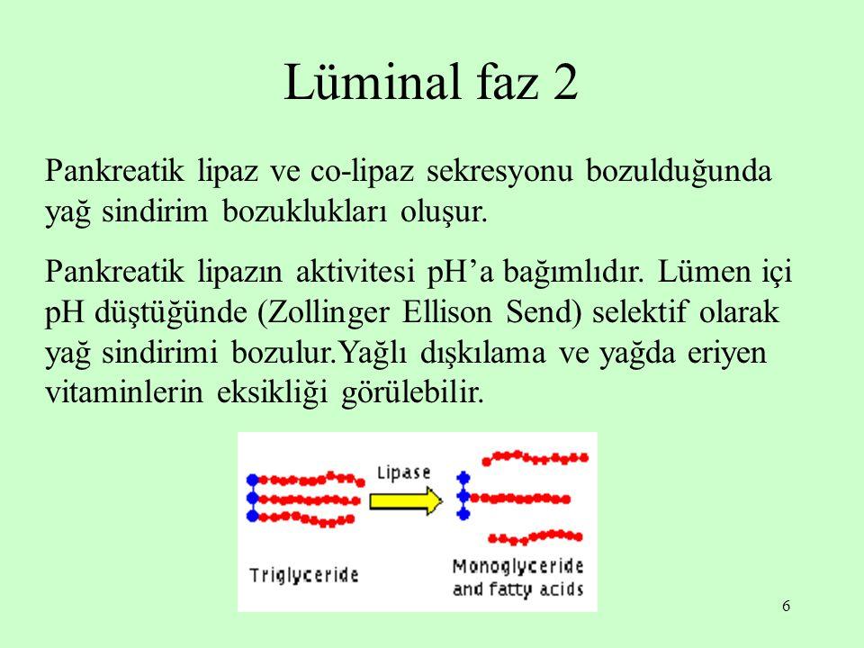 Lüminal faz 2 Pankreatik lipaz ve co-lipaz sekresyonu bozulduğunda yağ sindirim bozuklukları oluşur.