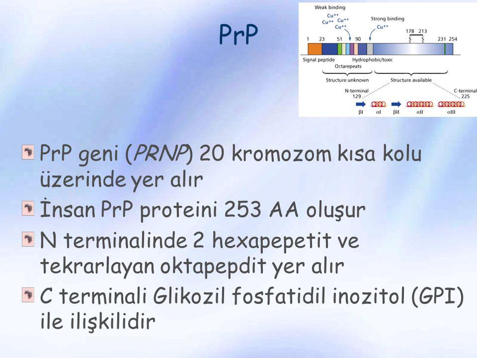 PrP PrP geni (PRNP) 20 kromozom kısa kolu üzerinde yer alır