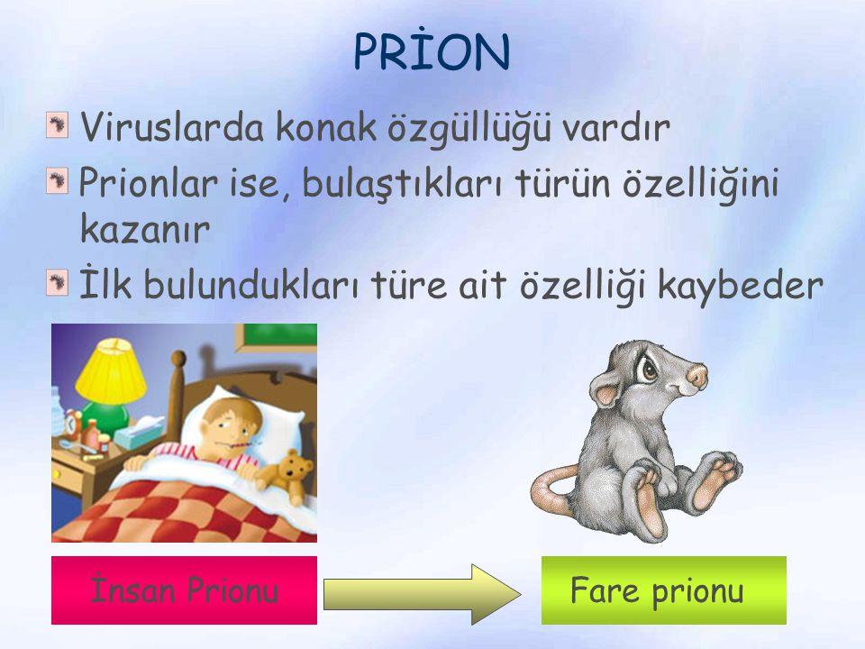 PRİON Viruslarda konak özgüllüğü vardır