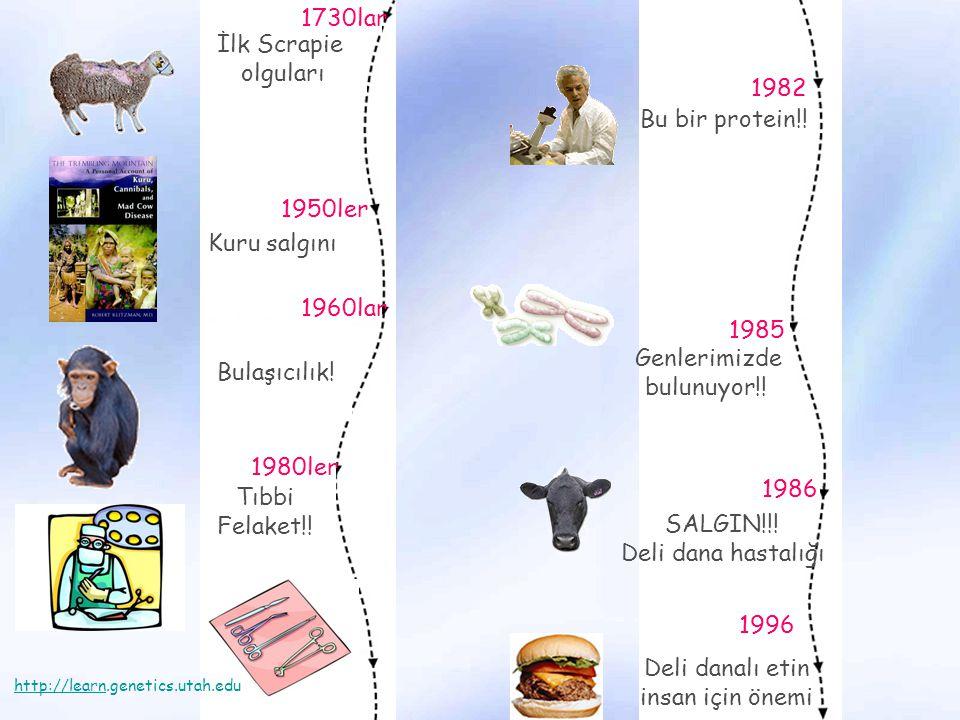 1730lar İlk Scrapie olguları 1982 Bu bir protein!! 1950ler