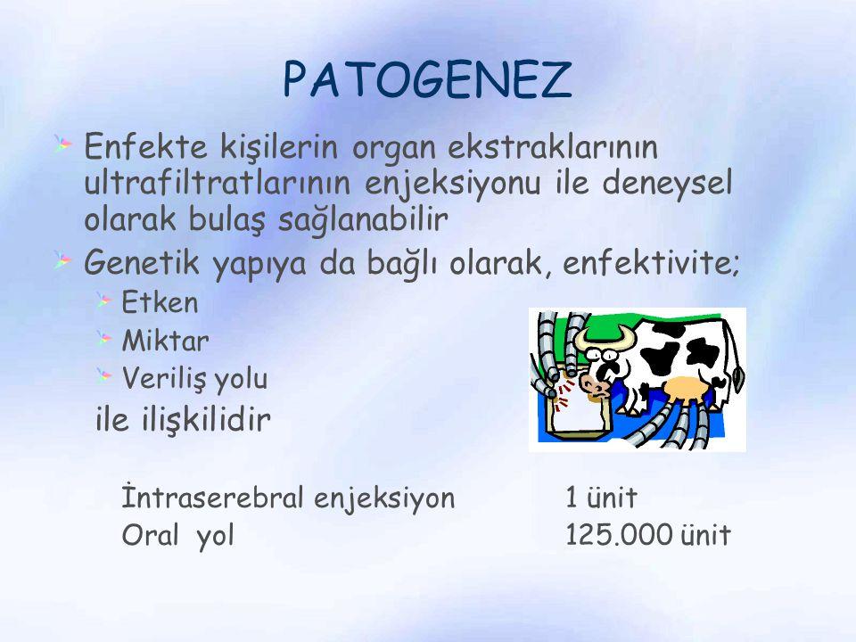 PATOGENEZ Enfekte kişilerin organ ekstraklarının ultrafiltratlarının enjeksiyonu ile deneysel olarak bulaş sağlanabilir.