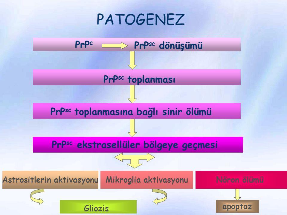 Astrositlerin aktivasyonu Mikroglia aktivasyonu
