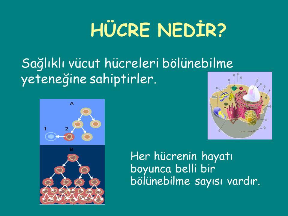 HÜCRE NEDİR Sağlıklı vücut hücreleri bölünebilme yeteneğine sahiptirler. Her hücrenin hayatı. boyunca belli bir.