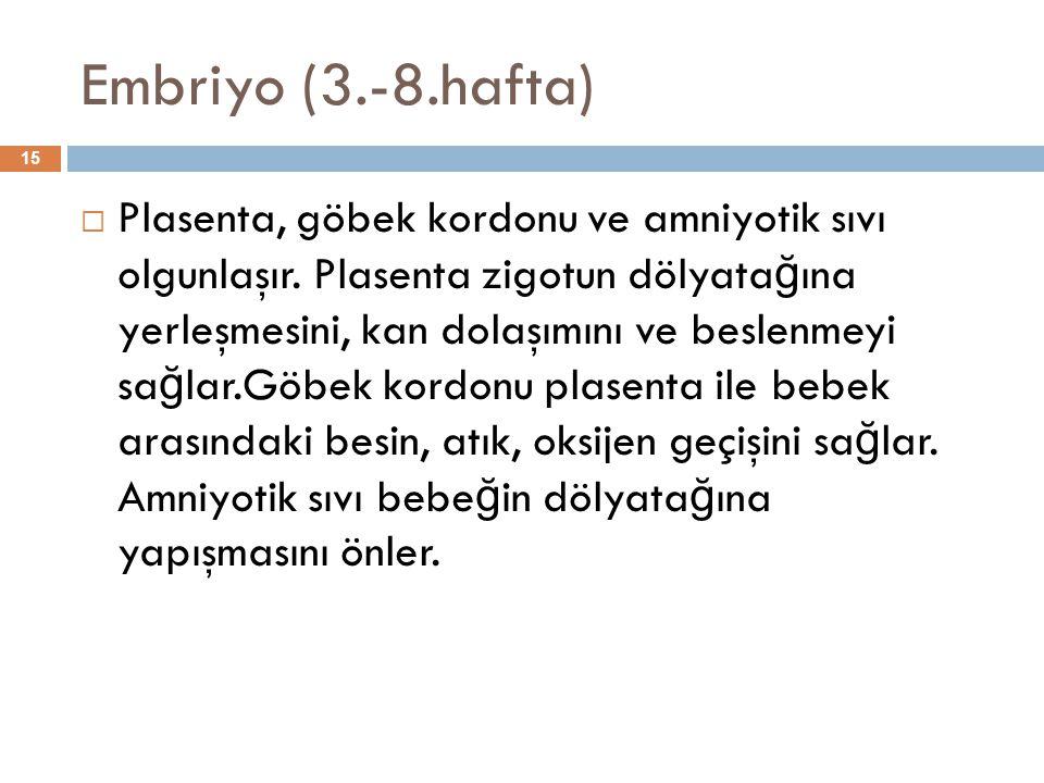 Embriyo (3.-8.hafta)