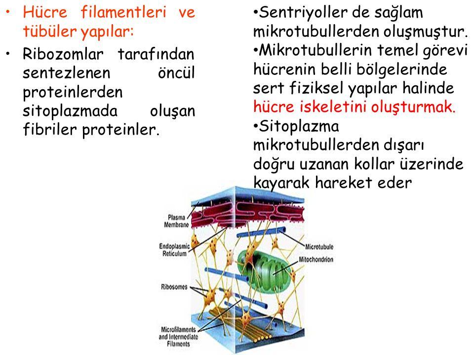 Hücre filamentleri ve tübüler yapılar: