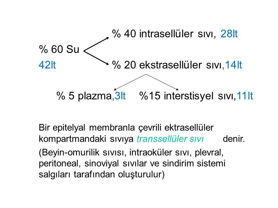 % 40 intrasellüler sıvı, 28lt % 60 Su
