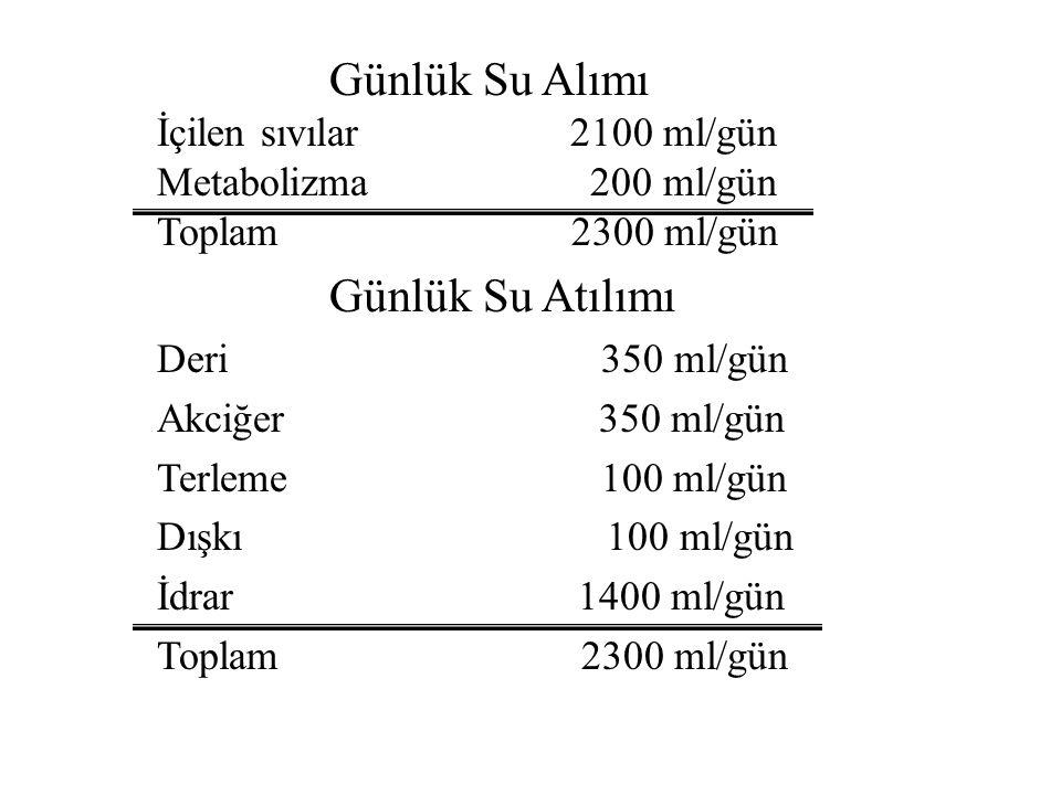 Günlük Su Alımı İçilen sıvılar 2100 ml/gün Metabolizma 200 ml/gün Toplam 2300 ml/gün