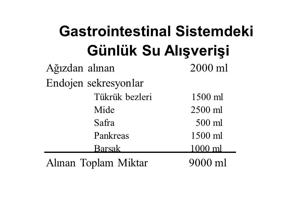 Gastrointestinal Sistemdeki