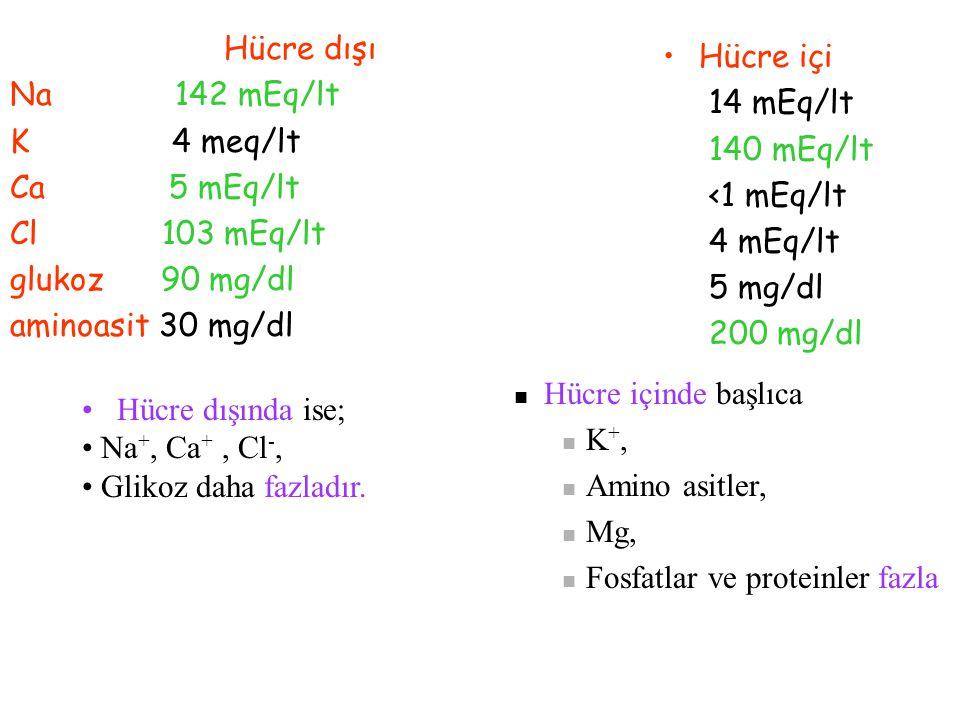 Hücre dışı Na 142 mEq/lt. K 4 meq/lt. Ca 5 mEq/lt. Cl 103 mEq/lt.