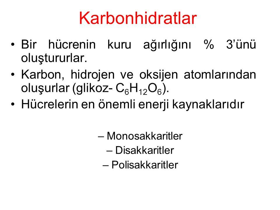 Karbonhidratlar Bir hücrenin kuru ağırlığını % 3'ünü oluştururlar.