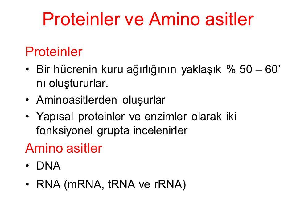 Proteinler ve Amino asitler