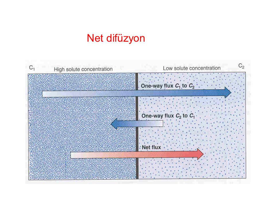 Net difüzyon