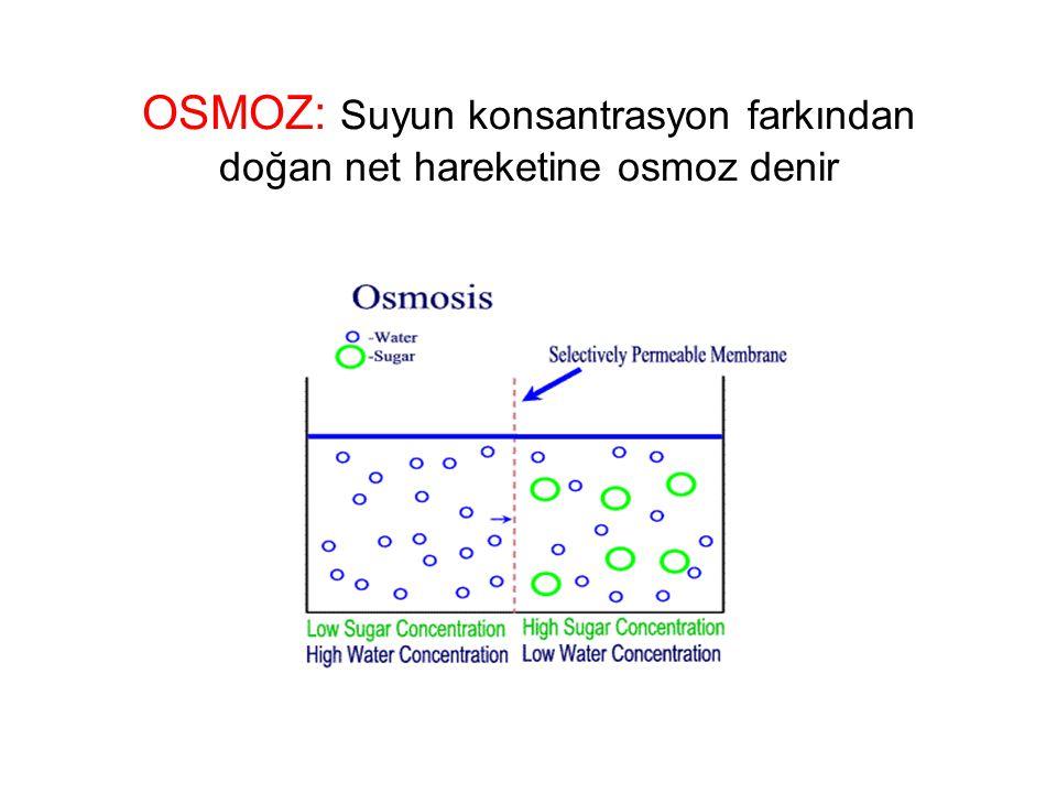 OSMOZ: Suyun konsantrasyon farkından doğan net hareketine osmoz denir