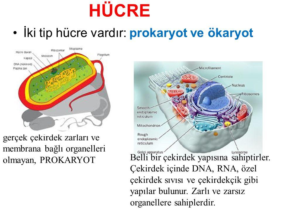 HÜCRE İki tip hücre vardır: prokaryot ve ökaryot