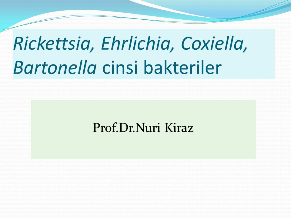 Rickettsia, Ehrlichia, Coxiella, Bartonella cinsi bakteriler
