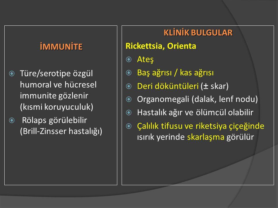 İMMUNİTE Türe/serotipe özgül humoral ve hücresel immunite gözlenir (kısmi koruyuculuk) Rölaps görülebilir (Brill-Zinsser hastalığı)