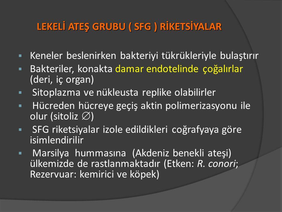 LEKELİ ATEŞ GRUBU ( SFG ) RİKETSİYALAR