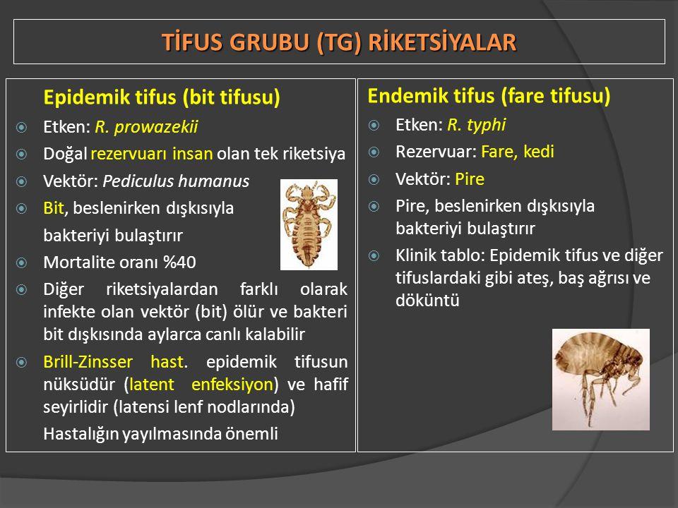 TİFUS GRUBU (TG) RİKETSİYALAR