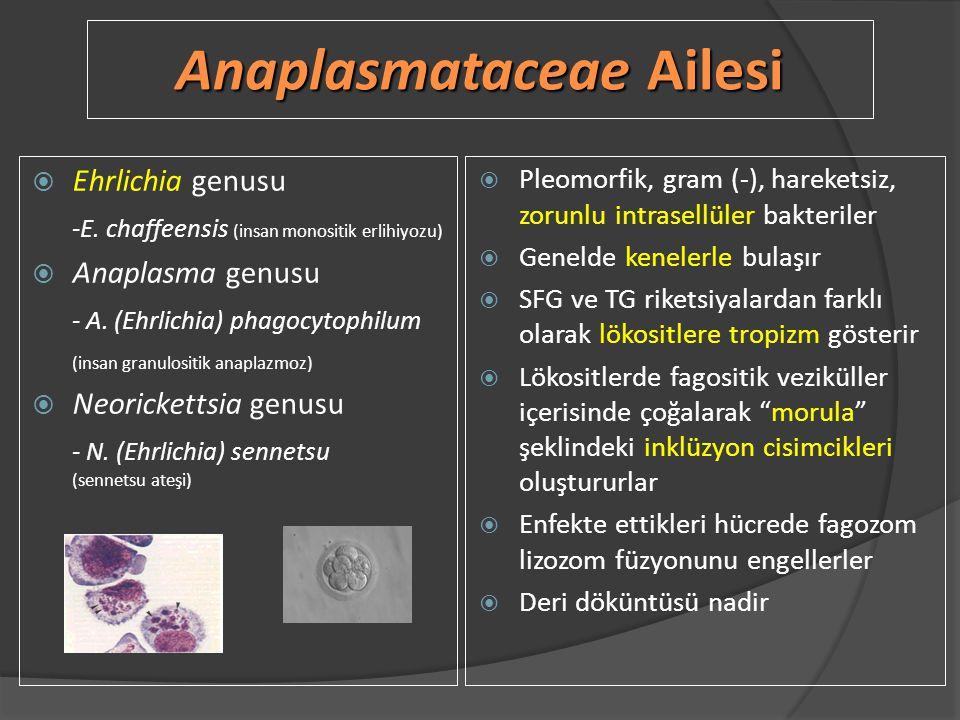 Anaplasmataceae Ailesi