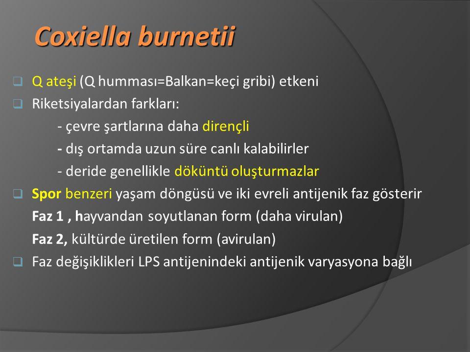 Coxiella burnetii Q ateşi (Q humması=Balkan=keçi gribi) etkeni
