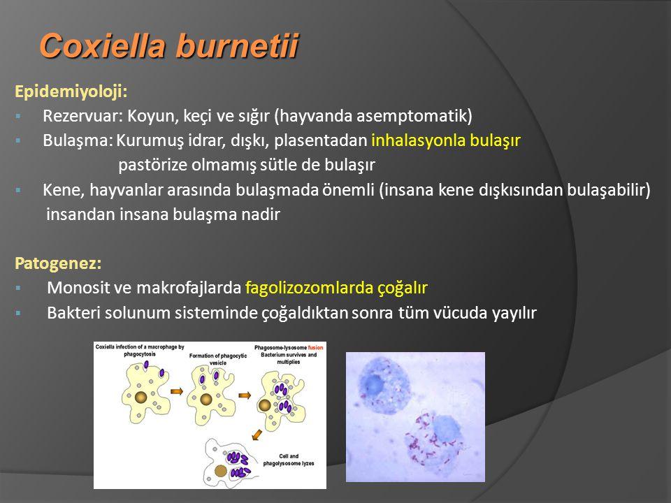 Coxiella burnetii Epidemiyoloji: