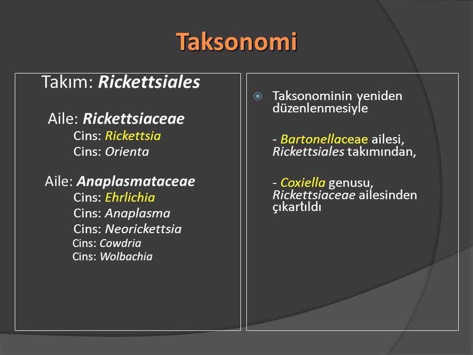 Taksonomi Taksonominin yeniden düzenlenmesiyle