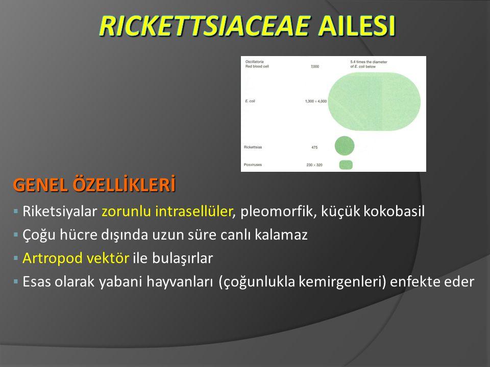 Rickettsiaceae Ailesi
