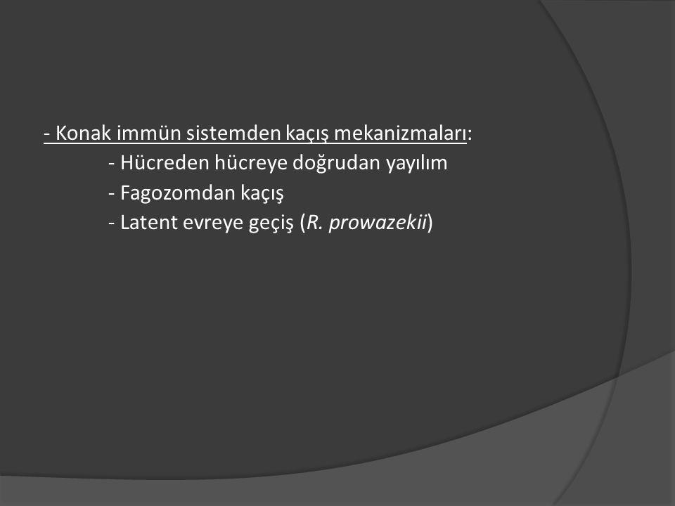 - Konak immün sistemden kaçış mekanizmaları: - Hücreden hücreye doğrudan yayılım - Fagozomdan kaçış - Latent evreye geçiş (R.