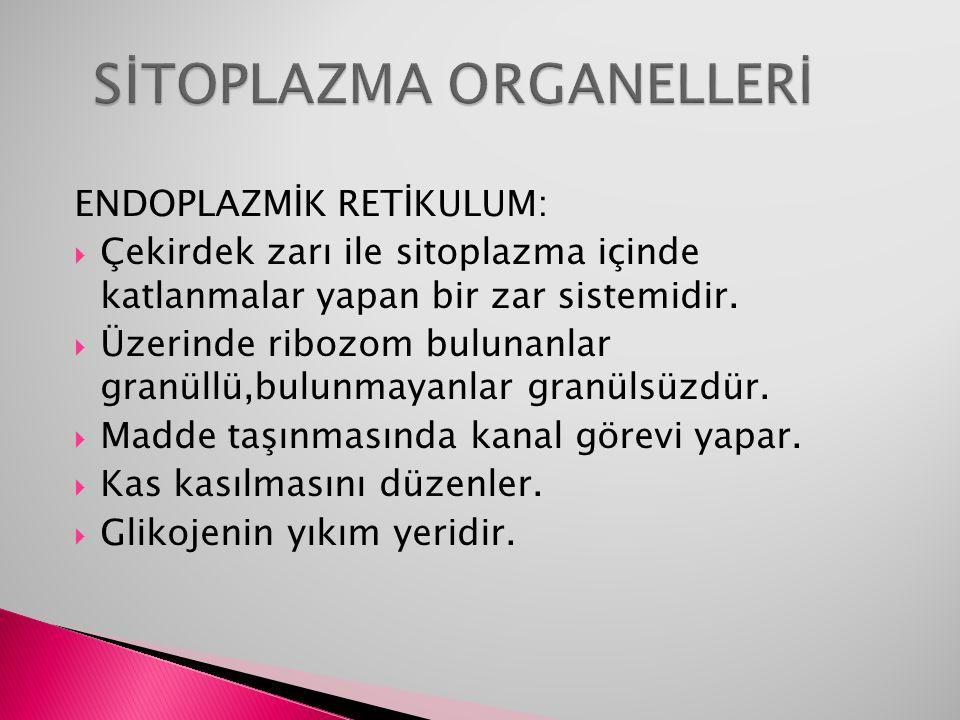 SİTOPLAZMA ORGANELLERİ