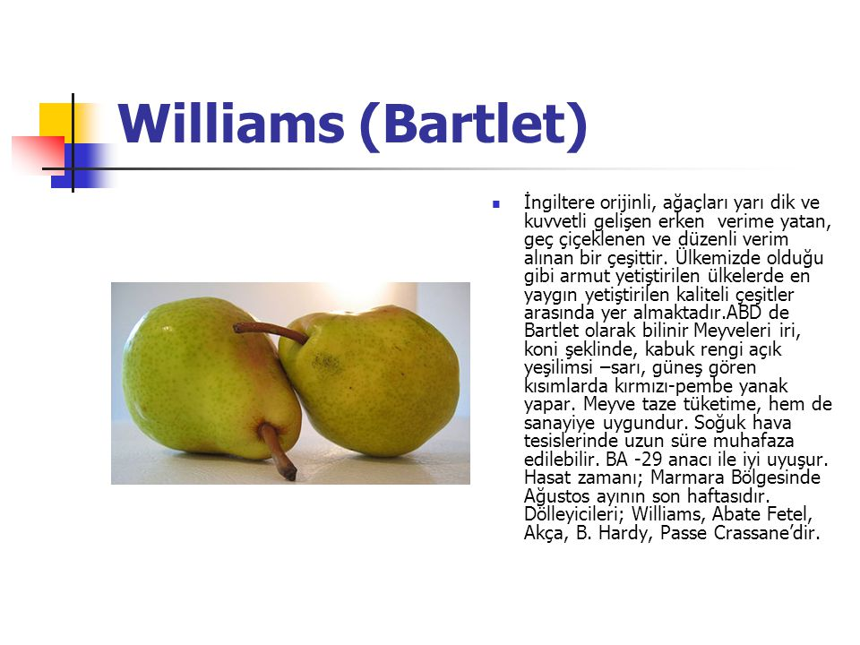 Williams (Bartlet)